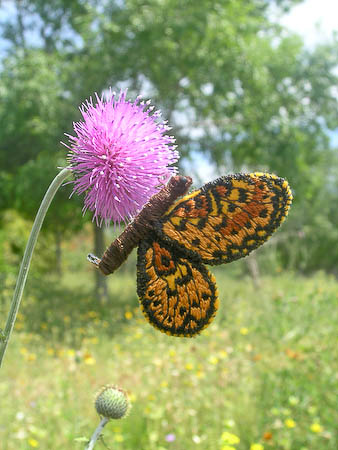 Fritillary Embroidery Butterfly Pin